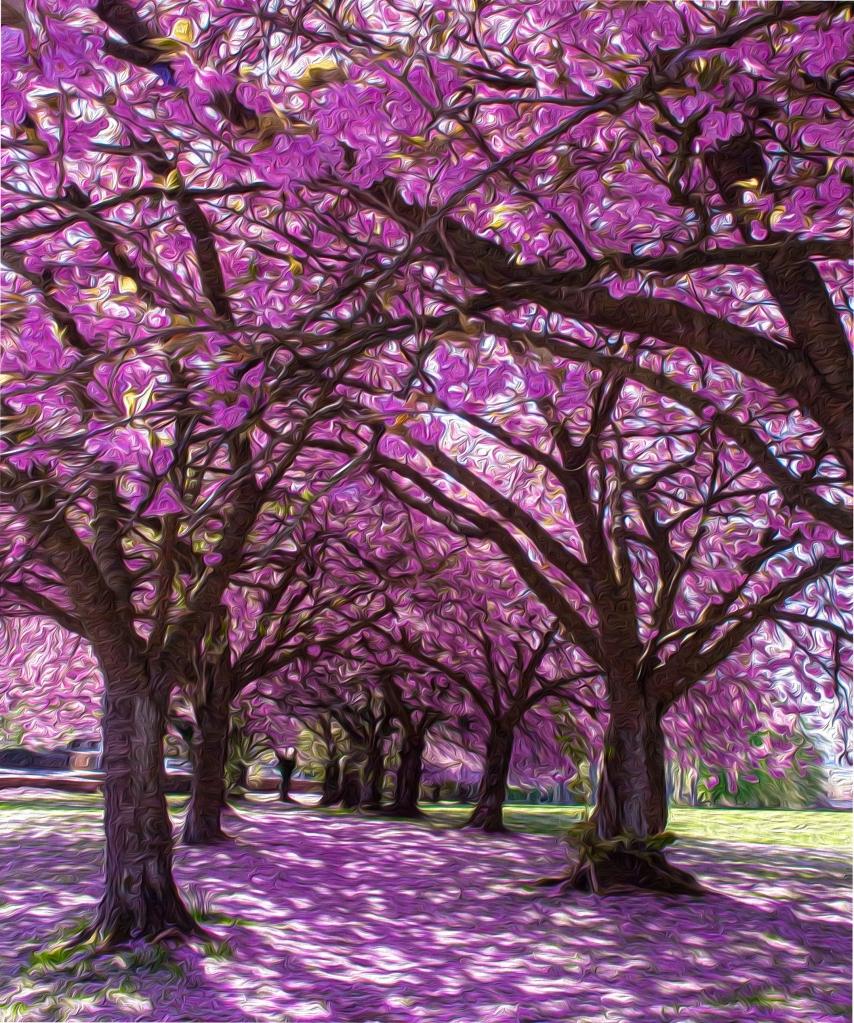 Blossom, Joyce Simpson