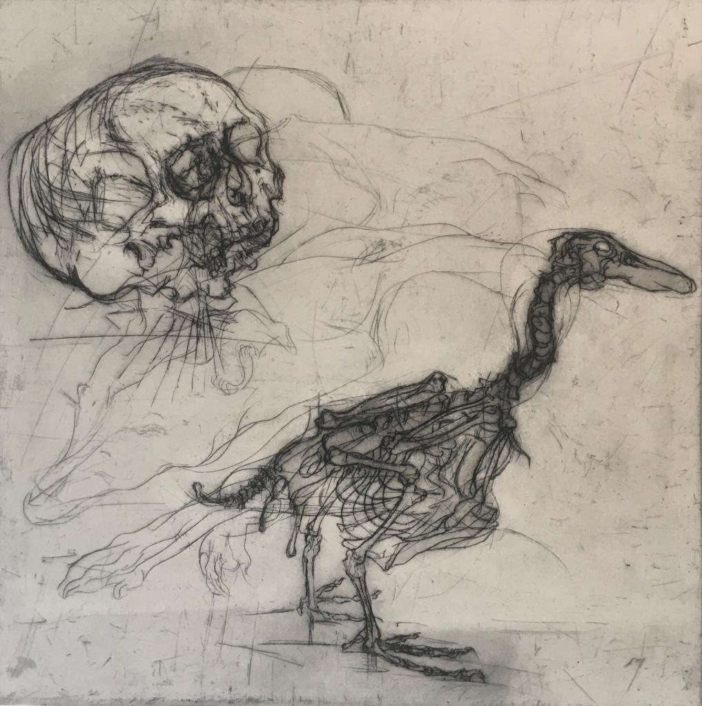 Skull Observing Duck